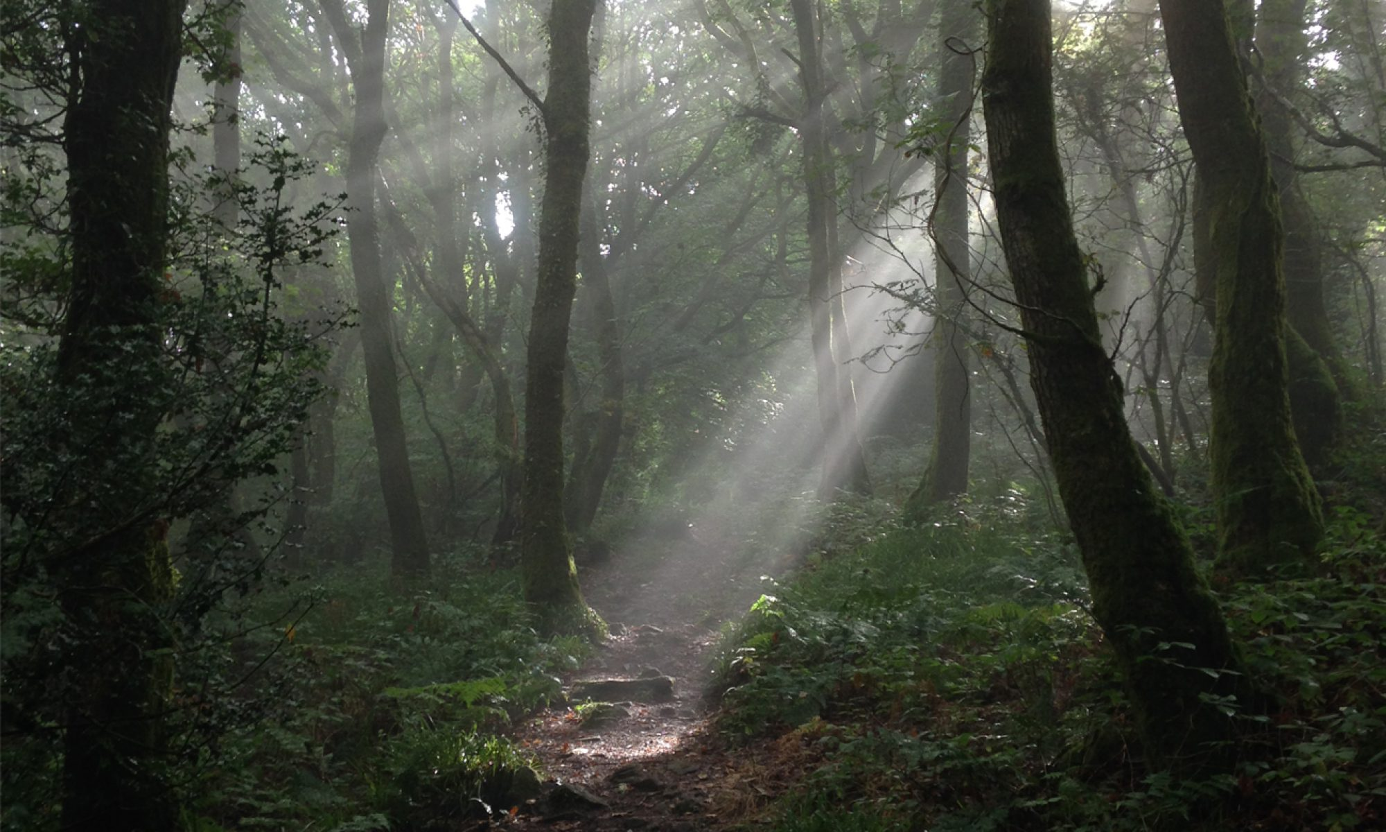 Mindfulness in the Forest of Dean and Wye Valley